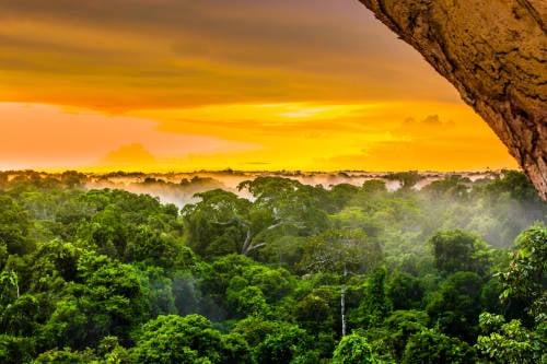 Más deforestación y más desigualdad: la Amazonía después del virus