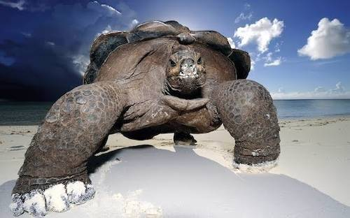 Volvieron a nacer naturalmente tortugas en Galápagos, ¡Después de un siglo!