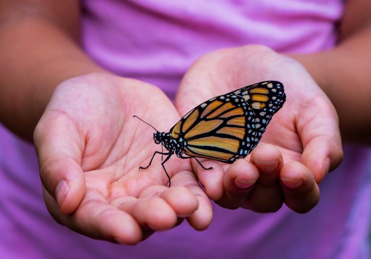 que-significa-que-una-mariposa-se-pose-en-ti