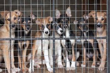 perros jaula
