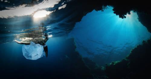 Qué son las zonas muertas del océano