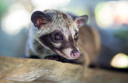 Durante la cuarentena aparece una especie que se creía extinta
