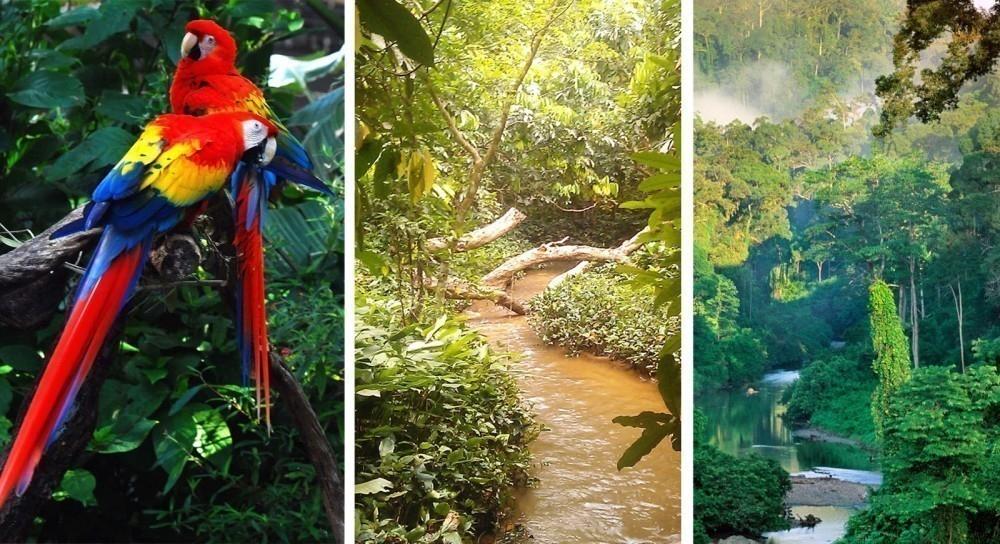 Resultado de imagen para bosques tropicales