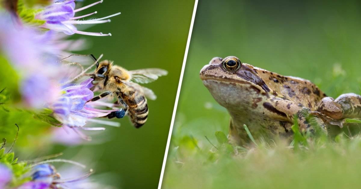 Así es como puedes proteger la biodiversidad desde el patio de tu casa