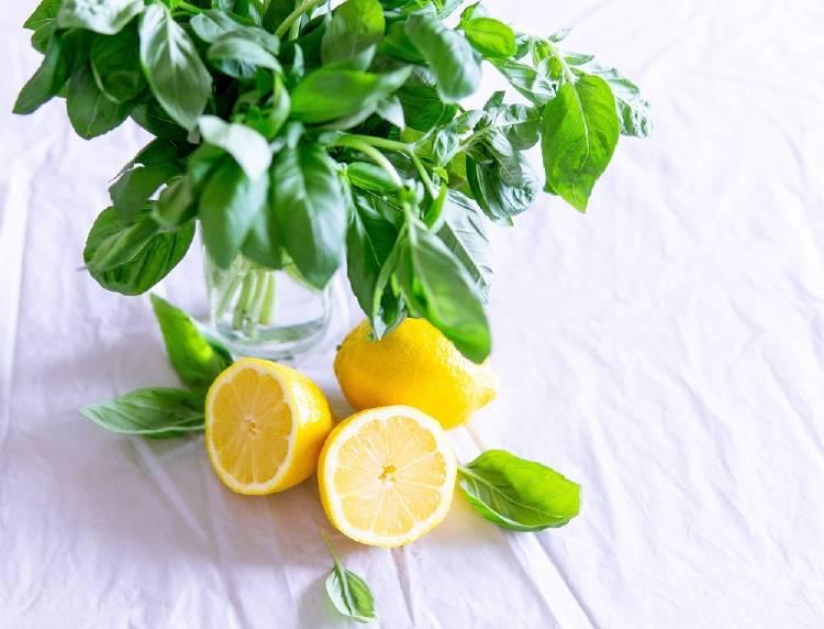 Albahaca: una de las hierbas para tratar la gripe