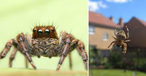 Esta es la causa por la que las arañas gigantes están invadiendo Inglaterra