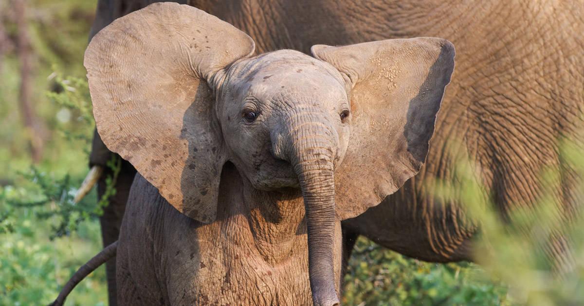 Un santuario asiático le salvó la vida a un elefante de 4 meses