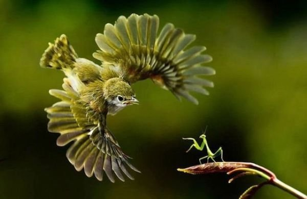 Perfectly-Timed-Animal-Photos-1