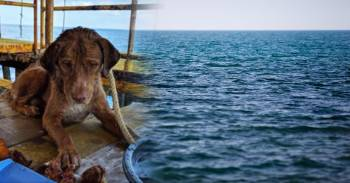 El misterio del perro que apareció nadando a 200 kilómetros de la costa de Tailandia