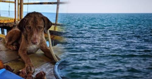 El misterio del perro que apareció nadando a 200 km de la costa de Tailandia