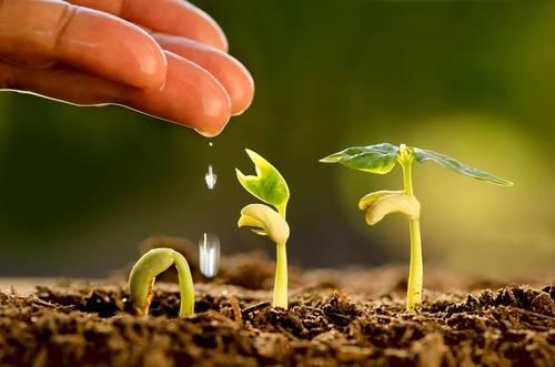Agroecología: el camino hacia un sistema alimentario justo y sostenible