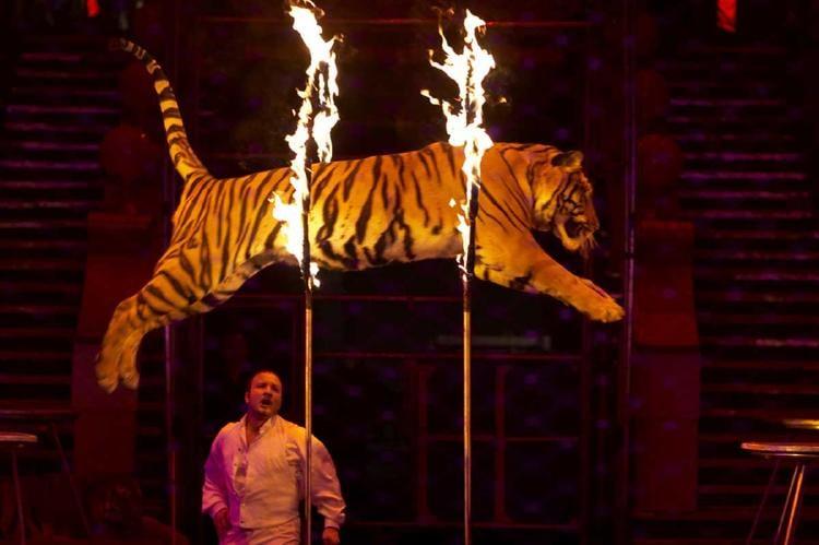 circo animales