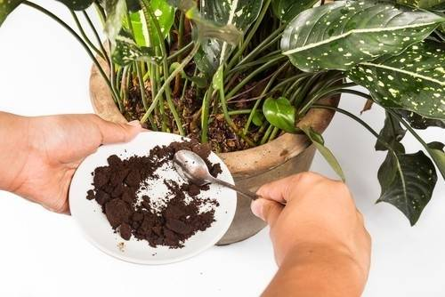 5 fertilizantes naturales que puedes preparar en casa