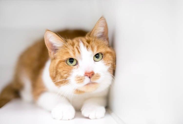 gato veterinario