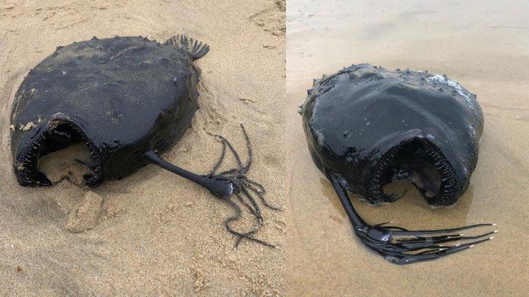 Escalofriante pez de las profundidades es hallado en las costas de California
