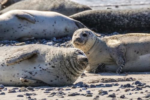 Reino Unido estableció el santuario marino más grande del Atlántico