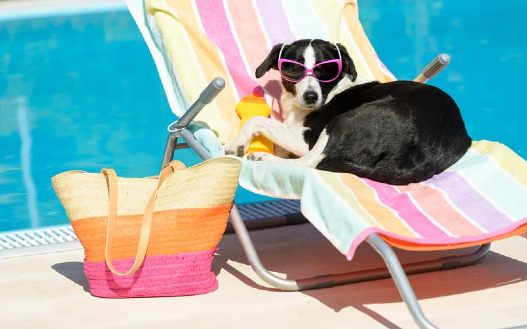 perro tomando sol piscina