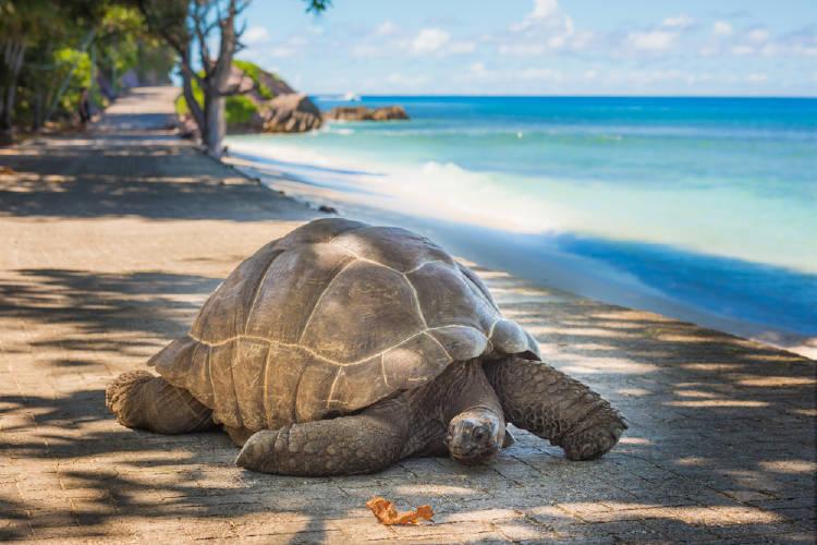tortuga gigante islas seychelles