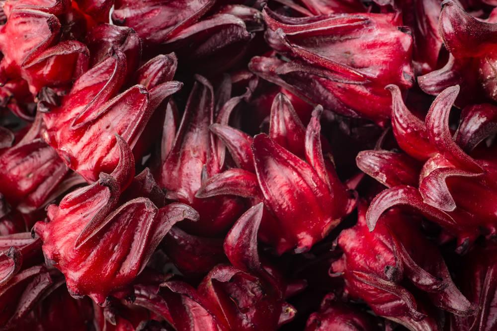 Flor de Jamaica: un desinfectante natural superior a los comerciales