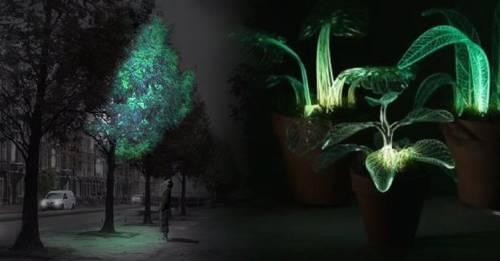 Científicos crean árboles bioluminiscentes para iluminar las calles