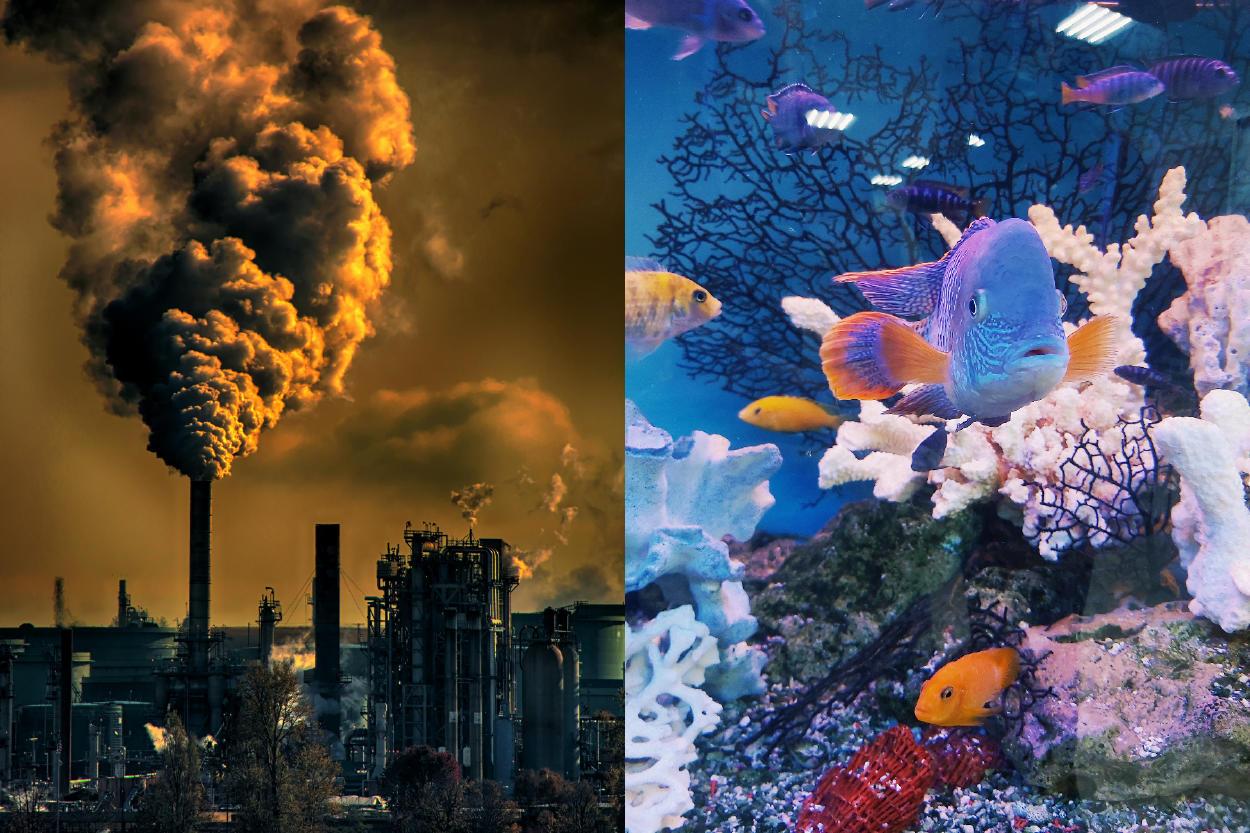 Así es como el calentamiento global pone en riesgo a toda la fauna marina