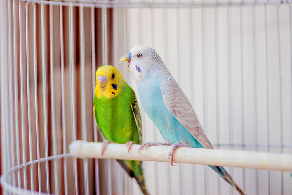 India prohibe comercializar y enjaular aves