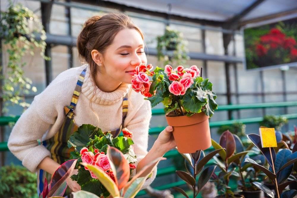 Las flores podrían ser la alternativa a los pesticidas químicos