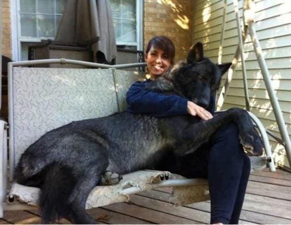 perros-grandes-7