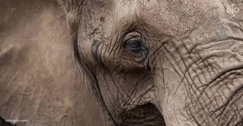 Flavia: así es la vida de la elefanta más triste del mundo