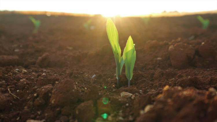 Una planta creciendo de la tierra en un campo con sol de fondo