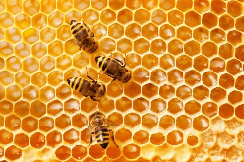 Descubren patrones matemáticos de las abejas para construir panales perfectos