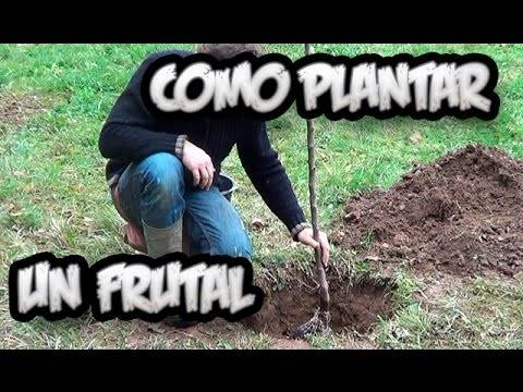 Como Plantar Un Frutal En El Jardin