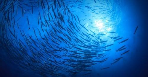 """Menos de un 3% del océano está """"completamente fuera de los límites"""" de actividad comercial"""