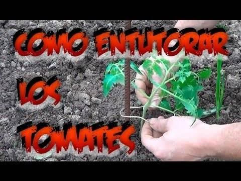 Como hacer un tutor para los tomates