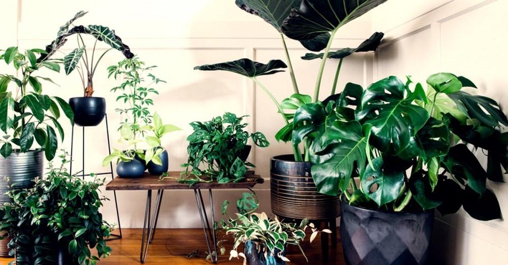 5 plantas que eliminan el olor a tabaco del ambiente y - Eliminar olor tabaco casa ...