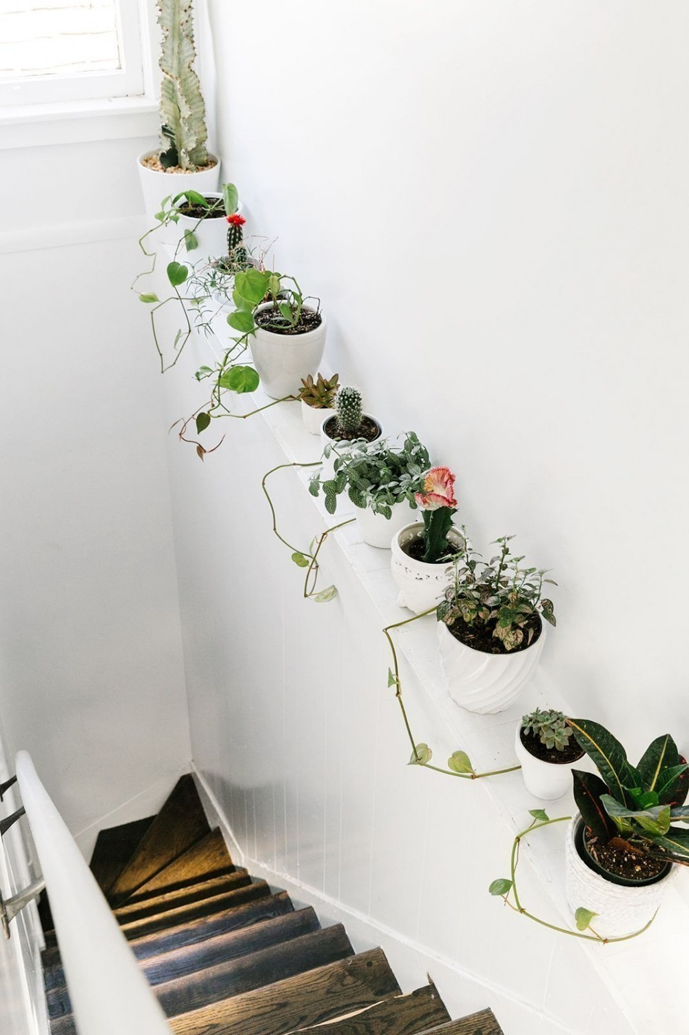12 ideas para decorar con plantas for Ideas para decorar interiores con plantas