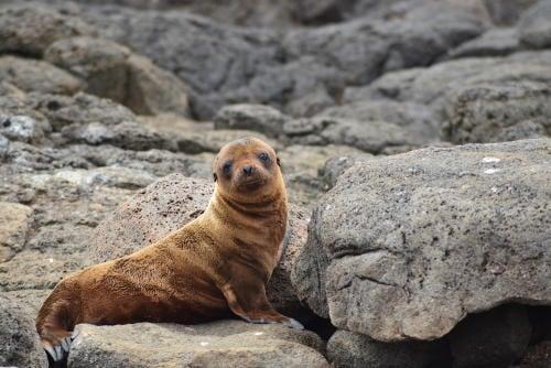 Esta ciudad en Nueva Zelanda cerró una carretera para proteger a un león marino