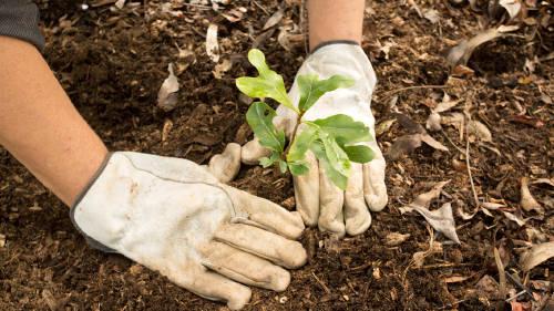 Líderes de la COP25 plantaron 1.000 árboles en Madrid