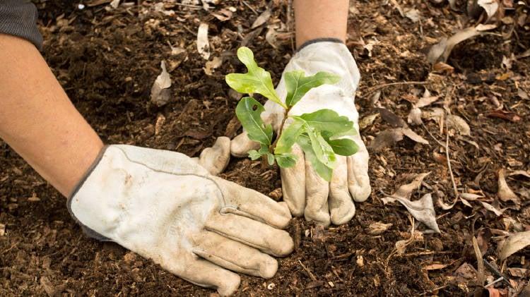 plantar-arbol-cambio-climatico