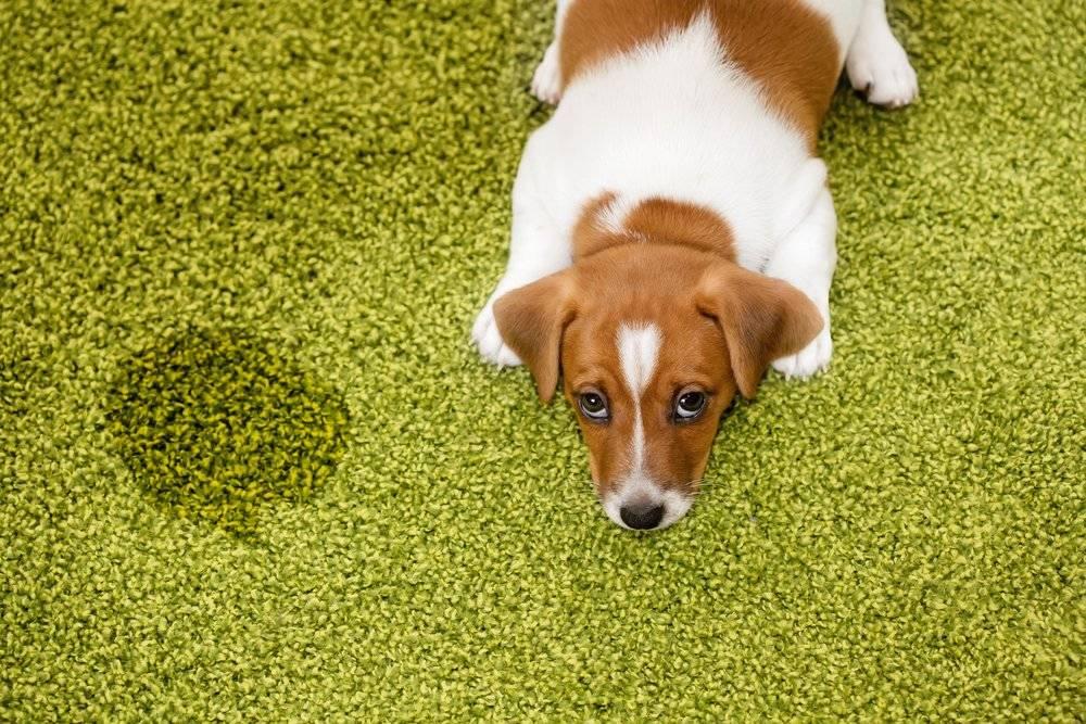 6 cosas que tu perro odia de ti y no lo sabías