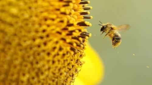 Alemania le pide a sus ciudadanos contar abejas