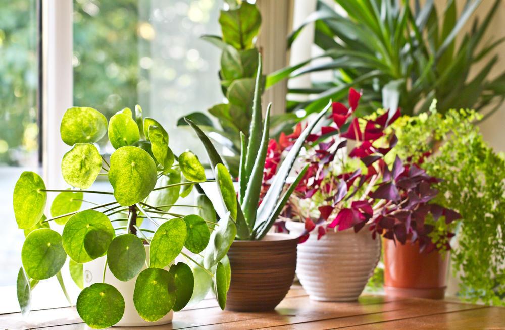 Descubre las 8 plantas que generan energía positiva en tu hogar