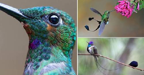 Admira la belleza de los colibríes en estas imágenes