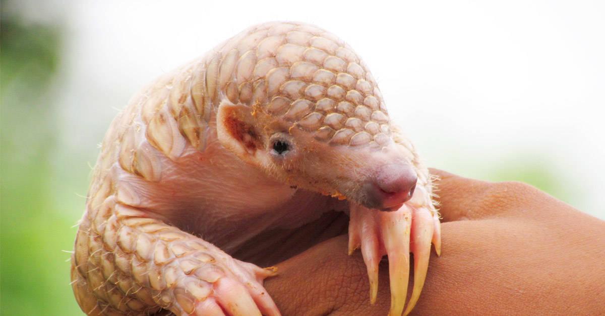7 extraños animales que están en peligro de extinción y seguro no conocías