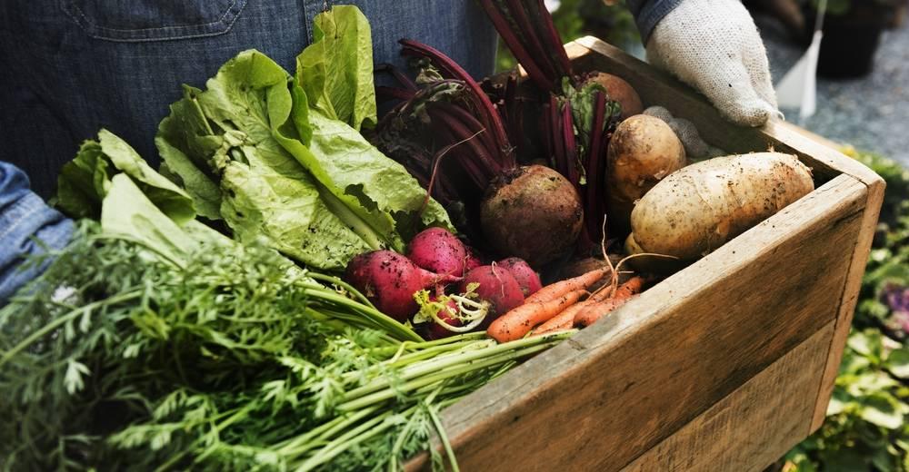 Conoce los secretos de las dietas ecológicas para comer sano y cuidar el ambient