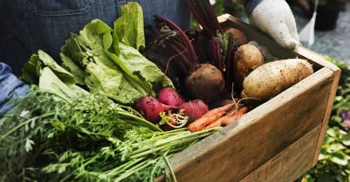 Frutas y verduras orgánicas, la base de la dieta ecológica