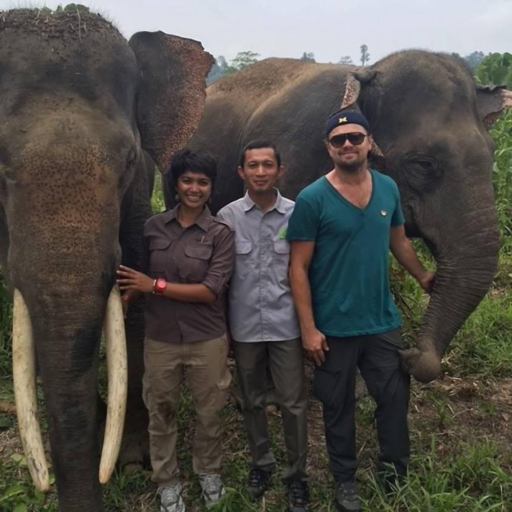 Leonardo DiCaprio pide al mundo salvar a elefantes y orangutanes de Sumatra