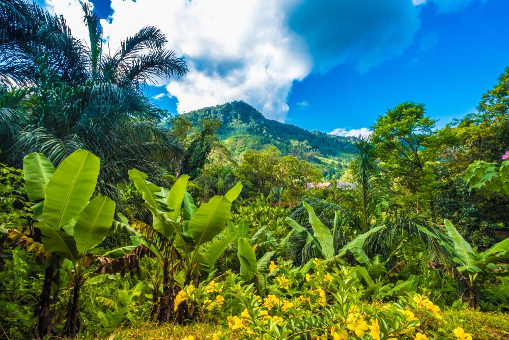 ¿Qué son los ecosistemas sostenibles?