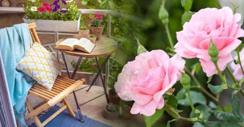 5 plantas para crear un jardín pequeño, agradable y aromático