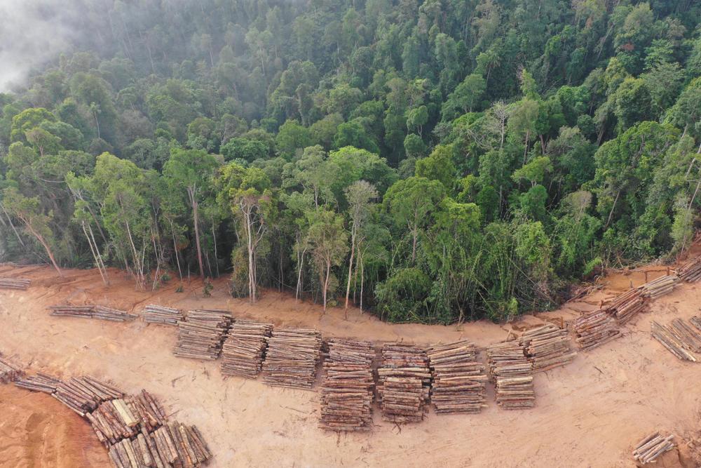 Los pueblos indígenas de Borneo unen sus voces en contra de la deforestación
